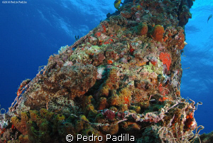 Scorpionfish, the king of the camouflage. 